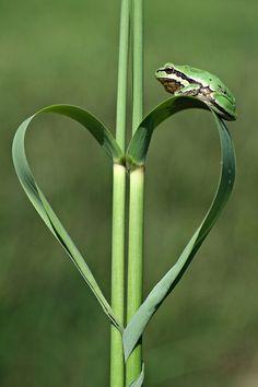 ♥ Amor y Corazones ♥ by:mehmet karaca (via:earth-song) I Love Heart, With All My Heart, Happy Heart, Love Is All, Heart In Nature, Heart Art, Earth Song, Funny Frogs, Fotografia Macro