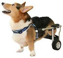 About Wheelchairs for Dogs thumbnail