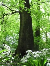 Worsley Woods, Salford, UK.   This once was home..