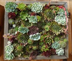 vertical garden idea | gorgeous succulents would be perfect for California backyards
