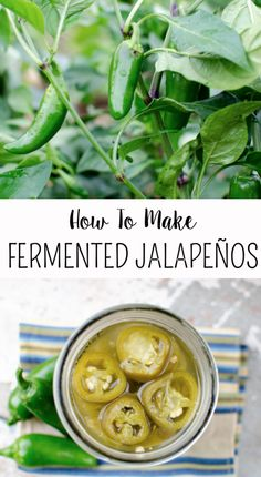 Learn how to preserve lacto-fermented jalapeños- This is SO quick and easy! Takes only like 5 minutes, doesn't use a canner, and lasts for 6 months!: