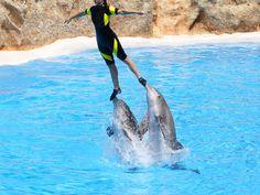 swim with dolphins!