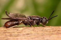 Dieser Artikel in der Übersicht:Mit besonderen Düften gegen Fliegen…