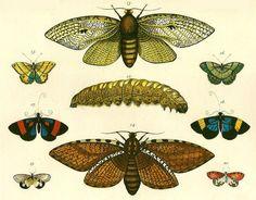 Ernst Haeckel - physician, biologist, naturalist, botanist, artist. Described & named thousands of species. 1834-1919.                                                                                                                                                      Más