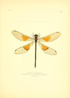 v. 1 - Aid to the identification of insects / - Biodiversity Heritage Library