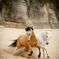 Spirit: Stallion of the Cimaron. Horses running in the sand.<<<< only pinning for that comment realky