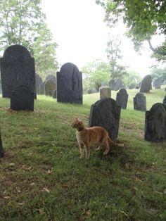 orange cat in graveyard Photo by www.stonecoldimages.com