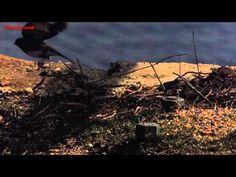 Small bird take off in UltraSlo - YouTube