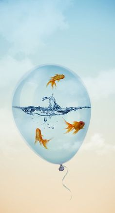 Fish swimming in water, inside a balloon Honda Dominator, Iphone 5 Wallpaper, Wallpaper Stickers, Ink In Water, Save Water, Deep Water, Golden Fish, Surrealism Painting, Water Photography