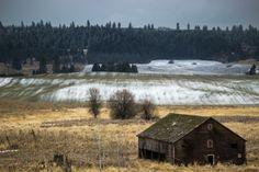 Abandoned Barn Feryn Conservation Area Near Mt Spokane WA  #abandoned #barn #feryn #conservation #near #spokane #photography