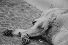 DogWorld: Κάθε αδέσποτο και μια ράτσα..