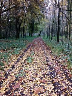Golden road from autumn mantle