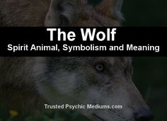 What does the Magpie spirit animal really mean? Find out the true meaning and symbolism of the Magpie in this special spirit animal analysis. Wolf Symbolism, Wolf Meaning, Bear Spirit Animal, Animal Meanings, Spiritual Meaning, Power Animal, Estj, Mental Strength, Animal Totems
