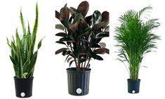 6 légtisztító szobanövény, amely segít neked a nagytakarításnál Balcony Garden, Plants, Balcony Gardening