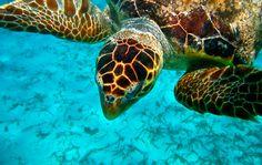 Belize   Caribbean Vacation Destination   Belize Tourism Board   Mother Nature's Best Kept Secret