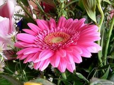 Pinned by sherry decker Flowers Gif, Trippy, Dahlia, Cute Dogs, Animation, Spring, Beautiful, Bouquets, Nature