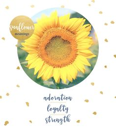 Sunflower Meaning and Symbolism - Fresh by FTD