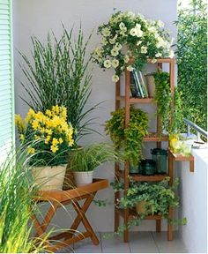 I like this combination of plant & wood together. Also, using these shelfs and stands help you keep your plants tidy.