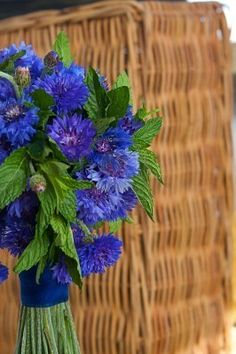 Wildflower Wedding Bouquet. Blue Cornflower with Mint Leaves