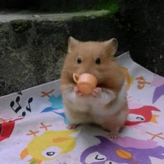 Cute Little Animals, Cute Funny Animals, Funny Hamsters, Funny Rats, Cute Rats, Flower Tea, Mood Pics, Cute Animal Pictures, Animal Memes