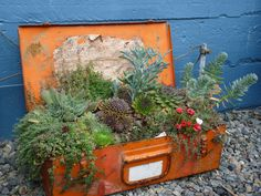 succulents in an awesome orange toolbox!