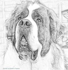 672 best blessed by a saint bernard that is images on pinterest