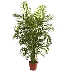Bay Isle Home Areca Palm Tree Floor Plant in Pot & Reviews   Wayfair