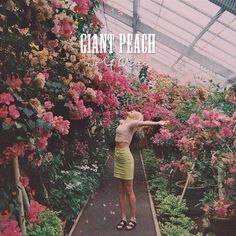 Giant Peach by Wolf Alice - what a tune