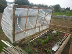 Loving this homemade mini polytunnel at the allotment/community garden