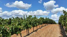 Qu'est-ce que le terroir et comment influence-t-il votre vin ? #vin #wine #winelovers #terroir #apprendrelevin #cultureduvin