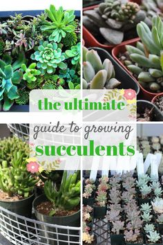 Succulents are one of my very favorite plants! They are SO FREAKING hardy, and pretty impossible to kill. Even if you have the blackest thumb ever-like I do! Succulents make excellent home decor accents because they're tiny, and it's super easy to change up their pot or container! Here is the ultimate guide to growing … Read More