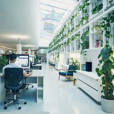 Tall Plants, Indoor Plants, Best Office Plants, Kentia Palm, Corn Plant, Plants Delivered, Cheese Plant, Air Conditioning Units, Low Maintenance Plants