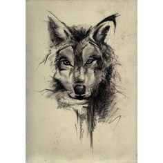 Wolf Drawing found on Polyvore featuring home, home decor and wall art