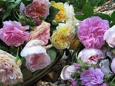 Charlotte-Moss-Flowers
