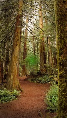 Vancouver Island , Canada Cathedral Grove on way to Port Alberni