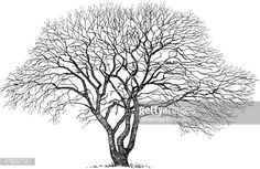 Vector Art : silhouette of the old tree
