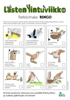 Learn To Count, Nature Crafts, Finland, Preschool, Classroom, Science, Teaching, Education, Kids