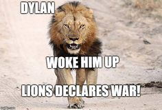 Meme Generator - Imgflip Chat Sites, Lions, War, Memes, Animals, Lion, Animales, Animaux, Meme