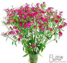 8 best dianthus images on pinterest dianthus flowers flower hot pink dianthus flowers are a great filler flower with an amazingly long vase life this is a big hit if you are looking for hot pink wedding flowers mightylinksfo