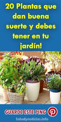 20 Plantas que dan buena suerte y debes tener en tu jardín! #plantas #buenasuerte #jardín #salud #horospoco #suerte Feng Shui, Aquaponics, Dream Garden, Fresco, Cannabis, Tulips, Cactus, Healing, Baby Shower