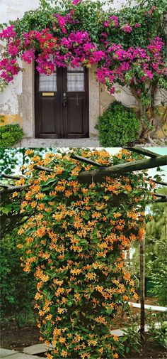 20+ favorite easy-to-grow fragrant flowering vines for year-round beauty. Plant them for an arbor, pergola or fence to create gorgeous outdoor rooms! - A Piece Of Rainbow #gardenvinesflower