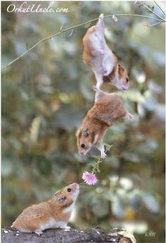 Hampster LOVE:]]]