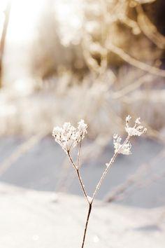 #winter #wonderland