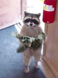 I found your kitten