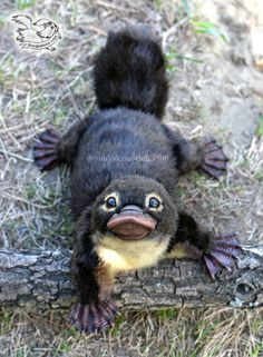Toy platypus cub by YuliaLeonovich on De. - Toy platypus cub by YuliaLeonovich on DeviantArt – Toy platypus cub by YuliaLeonovich on De. - Toy platypus cub by YuliaLeonovich on DeviantArt – - Baby Animals Super Cute, Cute Little Animals, Cute Funny Animals, Cute Dogs, Cute Babies, Adorable Puppies, Baby Animals Pictures, Cute Animal Photos, Photos Of Animals
