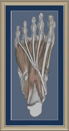 Human foot: anatomy cross-stitch pattern