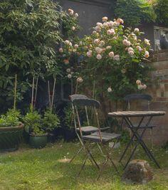 En rosebusk gjør susen for romantikken i hagen. Foto: Colourbox