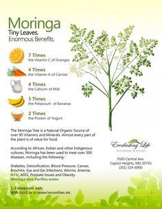 So Amazing!  Moringa: tiny leaves, huge benefits