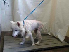 SAFE <3 A Rescue Partner has offered to rescue. Adoption applications are still welcome.  ****** PLEASE HELP SHARE THIS GIRL! IN **ISOLATION** NOT SEEN BY GENERAL PUBLIC! SET TO BE EUTHANIZED MON 5/19. Animal ID: A290521 Room No.: WDI10. Hi, I'm an approx 8 year old white female. I am friendly. OCAS - ORLANDO, FL.