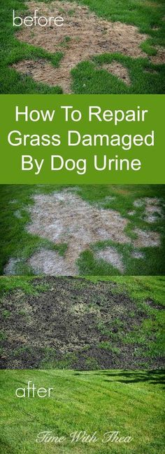 How To Repair Grass Damaged By Dog Urine ~ Step-by-step photo tutorial showing how to return grass to a healthy state after it has been damaged by dog urine. / timewiththea.com